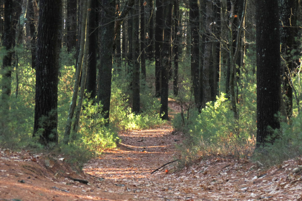trail to walden